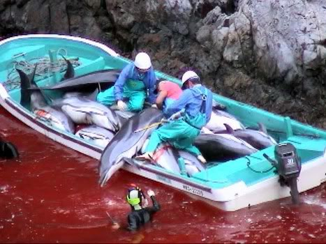 The Taiji dolphin slaughter
